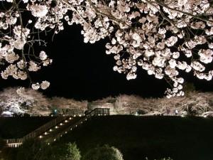 石舞台 夜桜ライトアップ