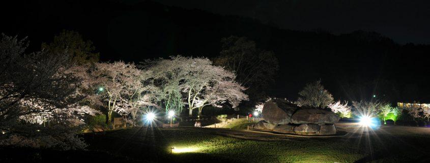 Ishibutai Cherry Blossom